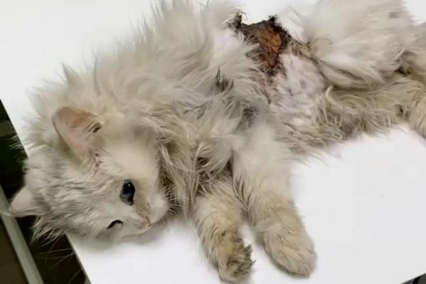 Чери забралась под капот, чтобы согреться, а в итоге получила раны и оказалась в ветклинике