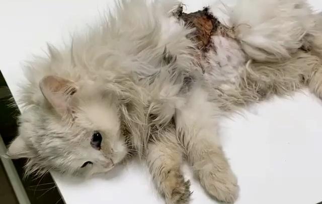 В Челябинске спасли кошку, забравшуюся под капот машины и потерявшую большой кусок кожи