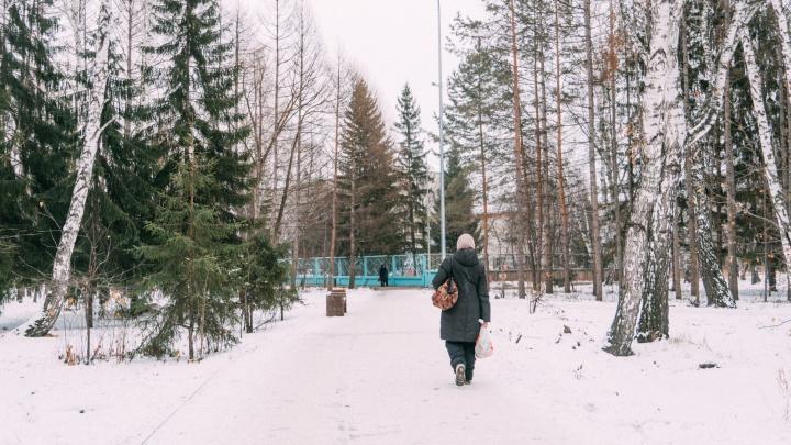 Омская епархия передумала сносить деревья у Сквера Молодожёнов — их пересадят