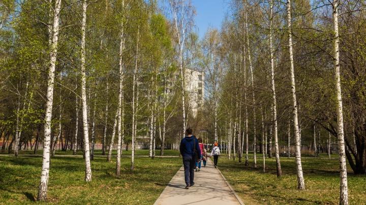 До 20 градусов: аномальное тепло придет в Новосибирск к концу следующей недели