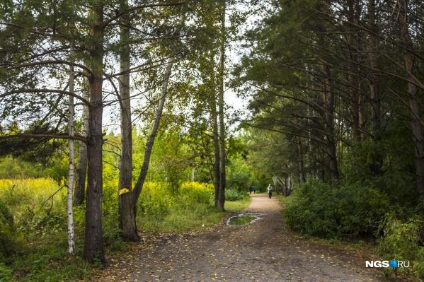 Одну из своих жертв преступник подкараулил в Заельцовском парке