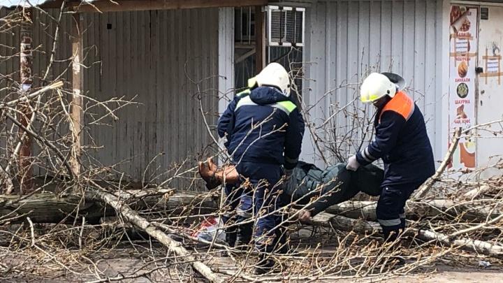 В Волгограде жители улицы Брестской предупреждали о смертельной опасности деревьев