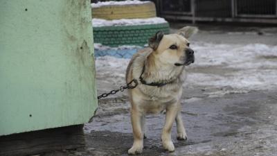 Мэрия опубликовала список мест, где запрещено гулять с собакой