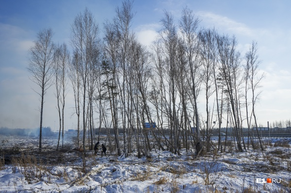 Владельцы участка около Калиновского поселка начали вырубать лес