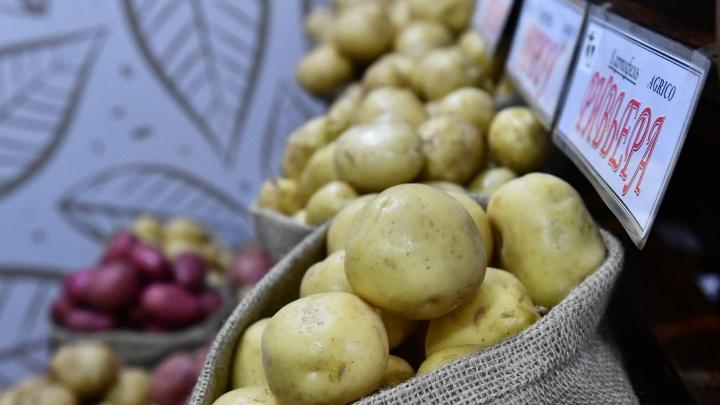 «Урожайность в два раза сократилась». Картошка на Урале снова взлетит в цене