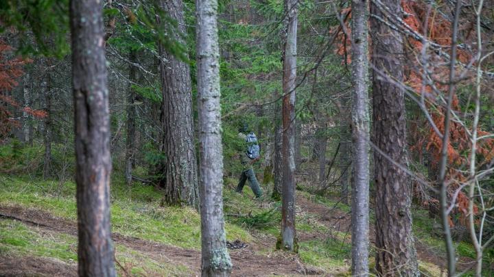 Двое подростков заблудились под Красноярском и провели ночь в лесу