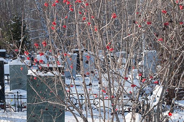 На Успенском кладбище захоронения разрешены только в пределах своих оградок. Если землю присоединят, возможно, эти правила изменят