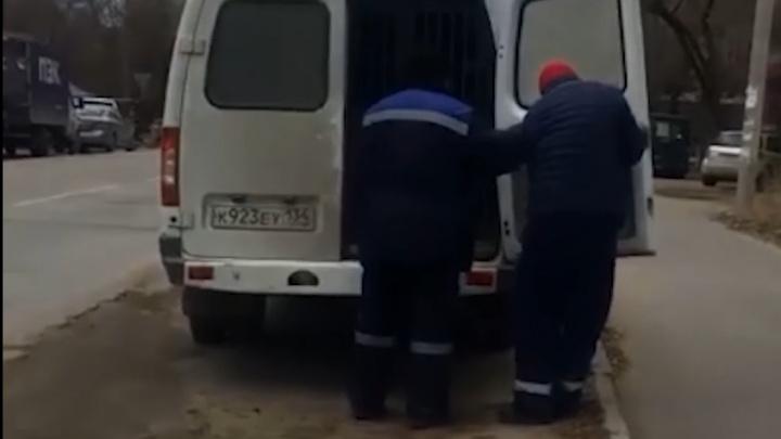 Спасайте кто может: в Ворошиловском районе устроили рейд по бродячим собакам