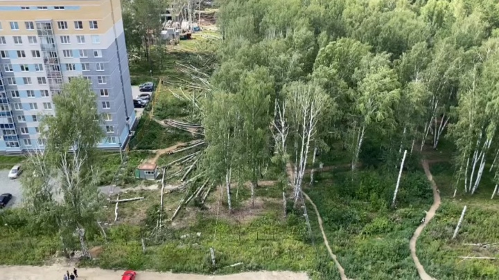 В Екатеринбурге застройщик начал зачистку площадки у Березовой рощи. Рассказываем, зачем проводятся эти работы