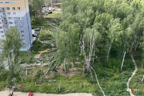 Под вырубку попали березы на территории, где будет проезд к новому жилому комплексу