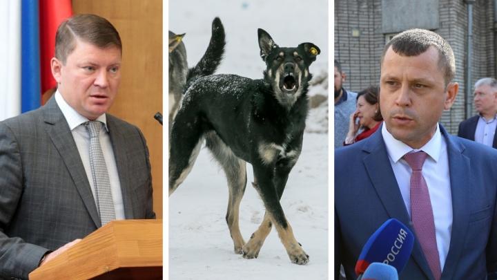 «Не разобрались и загнобили»: глава города вступился за чиновника, обвиненного в нападениях бродячих собак