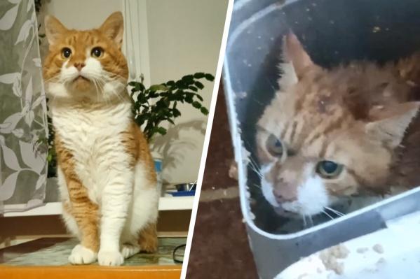 Рыжий кот Кузя мог бы стать долгожителем. Ему было 14 лет