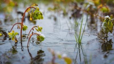 Синоптики дали прогноз погоды на выходные в Кузбассе (вам понравится)