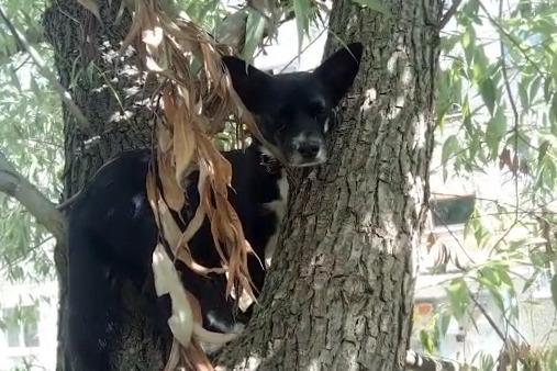 В Екатеринбурге зоозащитники спасли с дерева... собаку. Публикуем видео с высоты двух этажей