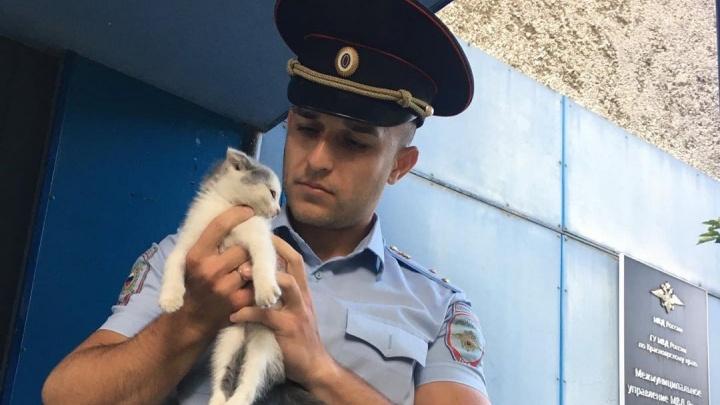 Ставший звездой интернет-мемов красноярский участковый спас от голодной смерти котенка