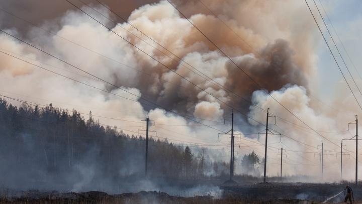 Ущерб — 160 млн. Как восстанавливают тюменский лес после страшных пожаров и что с выплатами погорельцам