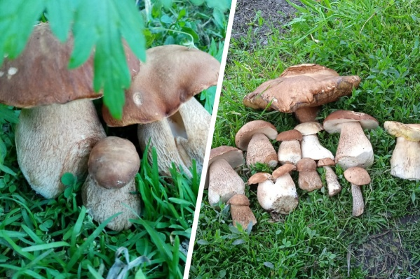 Такие грибы удалось найти в районе Ордынки