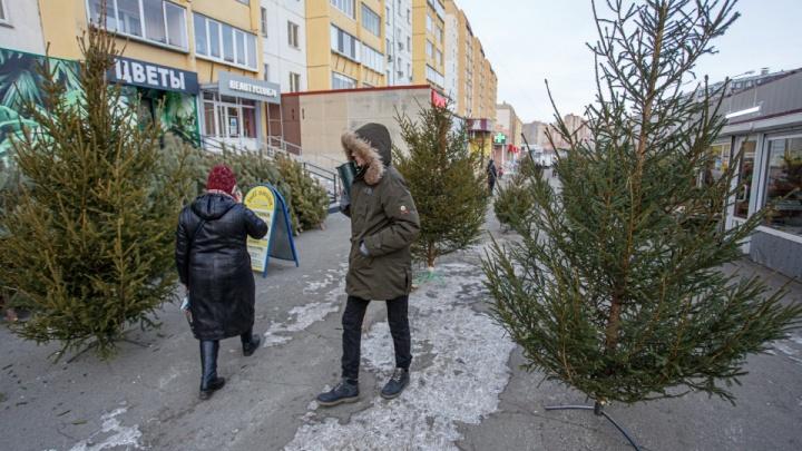 Чиновники попросили челябинцев выбрасывать новогодние елки на мусорки в своих дворах