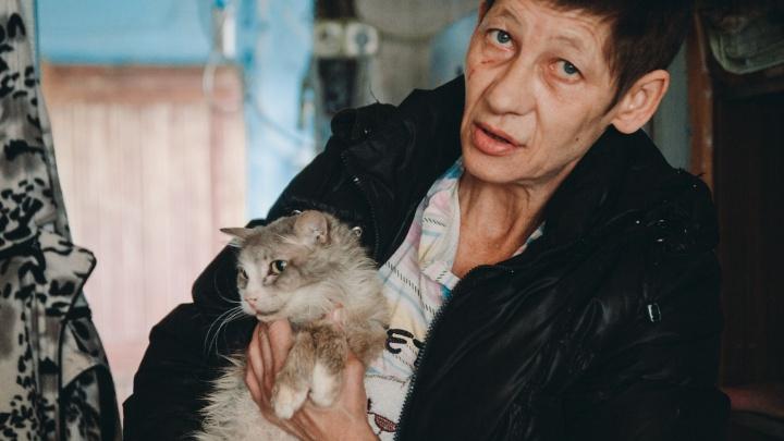 Владелица приюта со 128 кошками тяжело заболела. Тюменка срочно ищет новых хозяев для питомцев