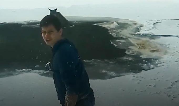 Красноярец разделся до трусов и спас из ледяной реки косулю: видео