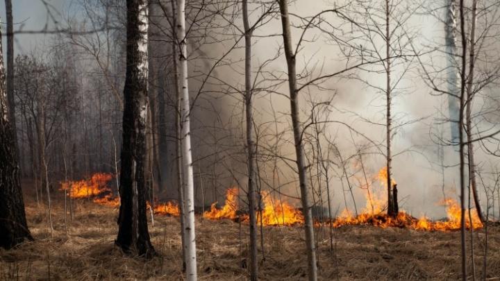 В тюменских лесах вводится режим ЧС из-за непрекращающихся пожаров