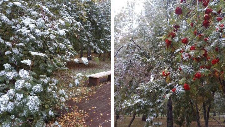 В Новосибирске пошел первый снег. Когда ударят морозы?