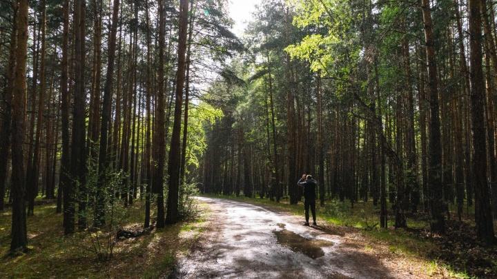 Куда съездить на выходные: сосновый бор, монастыри и лес с маралами в Омском районе