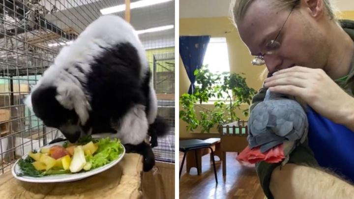 Экскурсии, конкурс и показательные кормления. Екатеринбургский зоопарк отметил 91 год