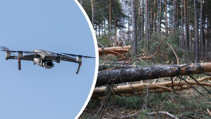 Ловить «черных лесорубов» в крае начали с помощью дронов с искусственным интеллектом