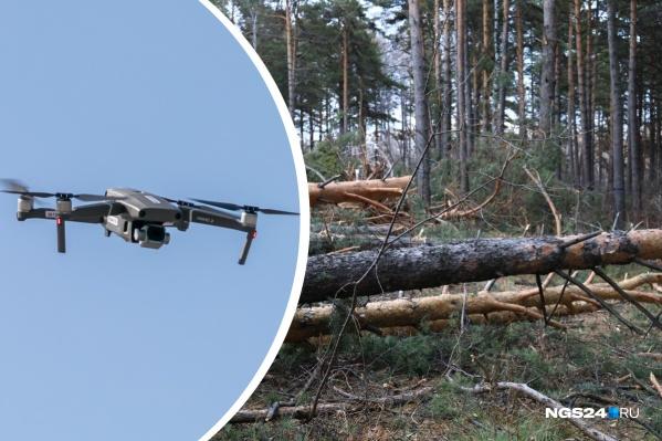 За сутки беспилотник может проанализировать более <nobr>100 кв. км</nobr> леса