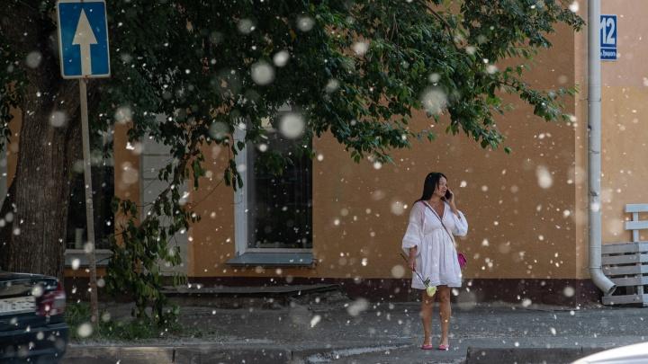 В Новосибирске начался сезон тополиного пуха — публикуем снимки, от которых хочется чихать