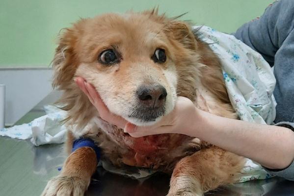 Грома нашли на железнодорожной станции — собака была ранена и замерзала