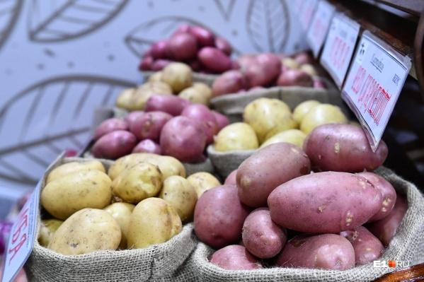 Картофель в Свердловской области растет в цене