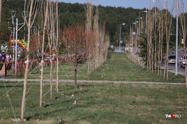 Этот сквер на Академика Королёва в Челябинске доделывали в октябре-ноябре, тогда же там высадили деревья
