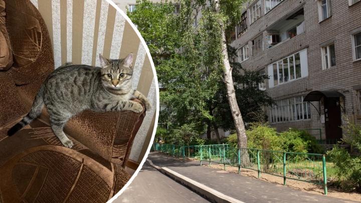 В Ярославле такса загрызла домашнего кота