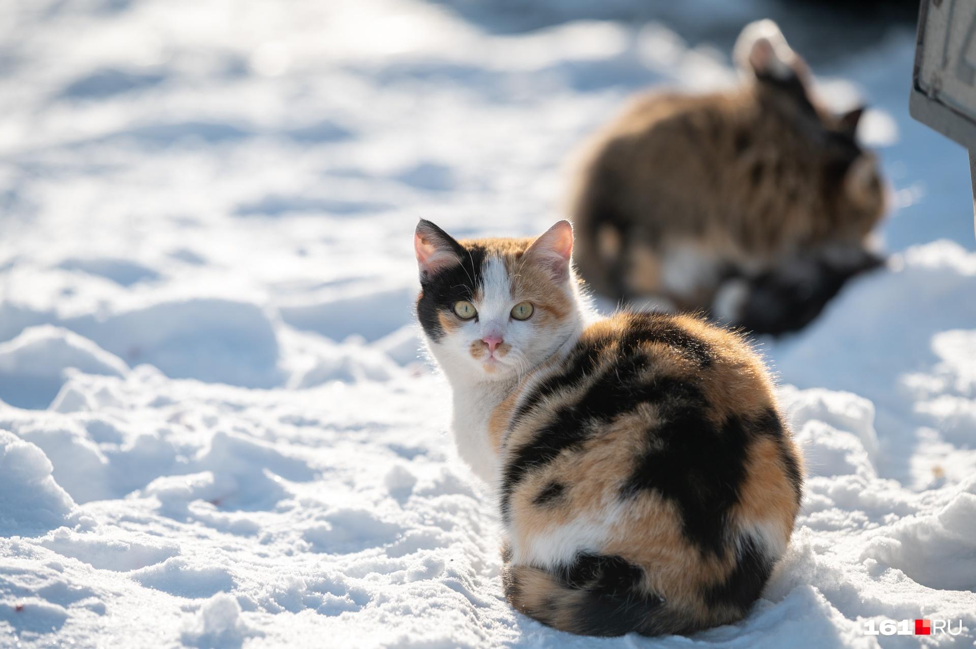 Наш фотограф никогда не отказывает себе в удовольствии поснимать котиков