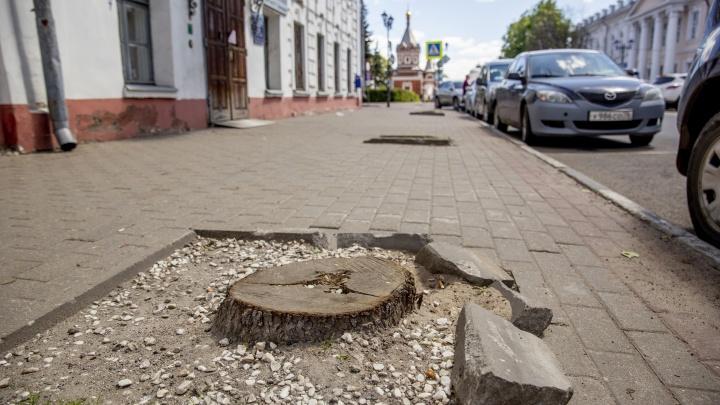 На центральных улицах Ярославля повырубали деревья. Фоторепортаж