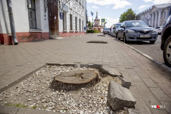 В тех местах, где росли деревья сейчас из земли торчат пеньки