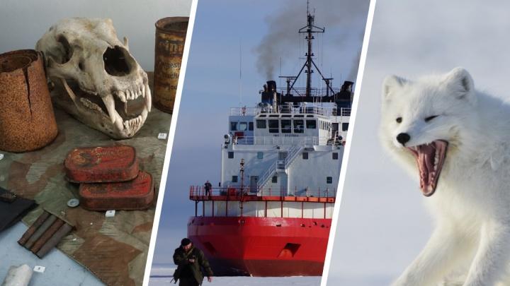 Прогулки по Арктике: интересные факты о местах, куда стремятся туристы и ученые
