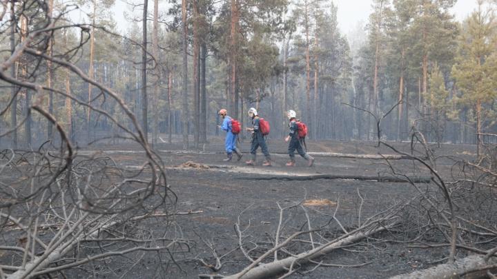 Площадь пожара в Борском районе уменьшилась со 100 га до 20 га