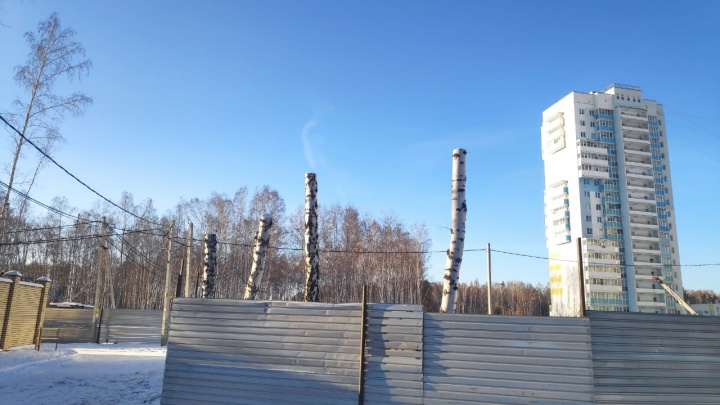«Снесли деревьев 500, если не больше»: в Челябинске вырубили часть рощи ради строительства детсада