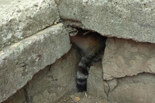 Из-под плит торчал только хвост кота