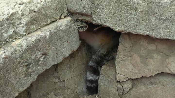 Усатый пленник: в Самарской области кот застрял под плитами дома