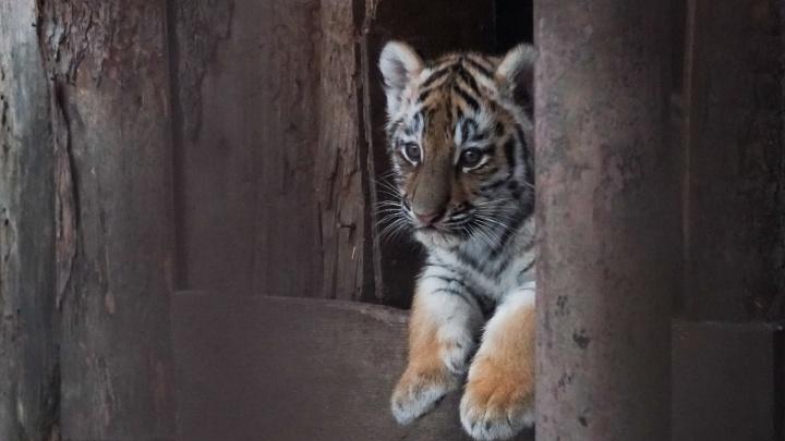 В акватеррариум пермского зоопарка тоже будут пускать только по QR-коду