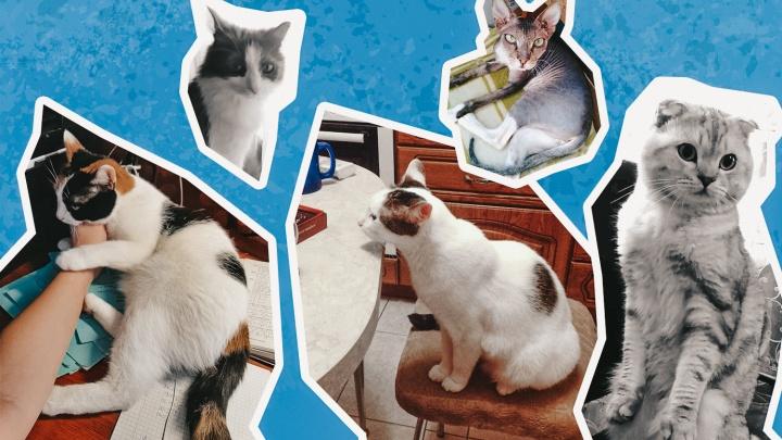 Кот в доме хозяин: любуемся на пушистых друзей уфимцев