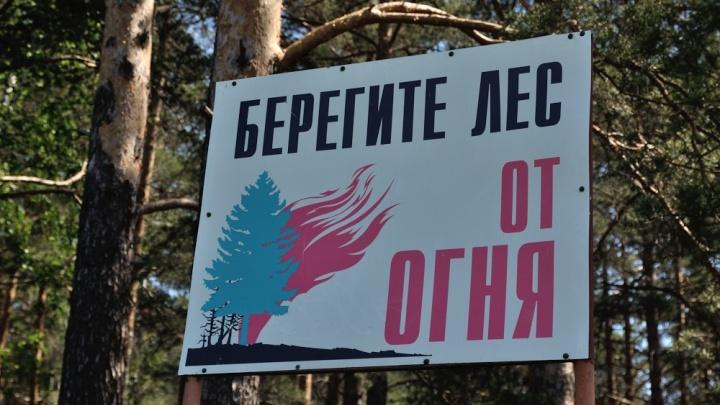 Леса горят, но уже меньше: площадь пожаров в Свердловской области сократилась вдвое