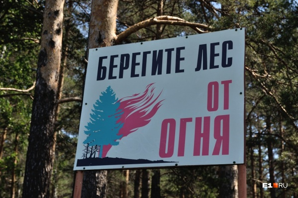 95% лесных пожаров удается быстро потушить, если о них сообщили вовремя
