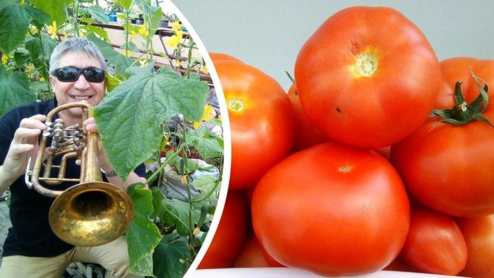 «Главное — корни в тепле»: можно ли собирать помидоры зелеными и как устроить плантацию на балконе