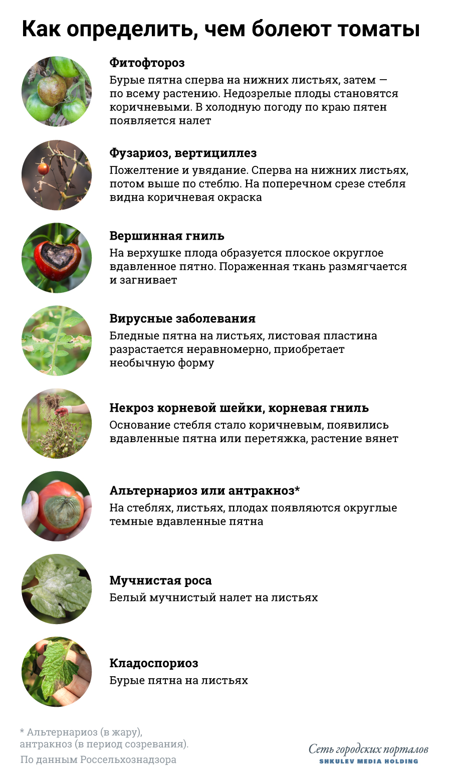 Признаки болезней томатов