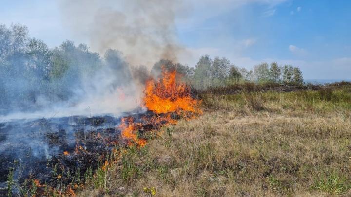 В пяти районах Башкирии горит 817,8 гектара лесов